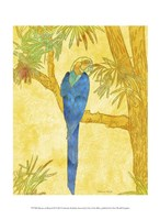 "Macaw on Branch II by Catherine Kohnke - 10"" x 13"""