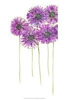 Pinwheels I Fine Art Print
