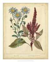 "Garden Flora I by Sydenham Edwards - 18"" x 22"""