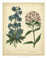 """Garden Flora II by Sydenham Edwards - 18"""" x 22"""""""
