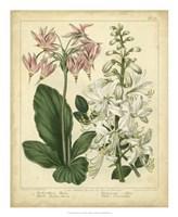 """Garden Flora IV by Sydenham Edwards - 18"""" x 22"""""""