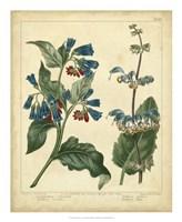 """Garden Flora V by Sydenham Edwards - 18"""" x 22"""""""
