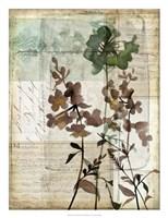 Music Box Floral II Framed Print