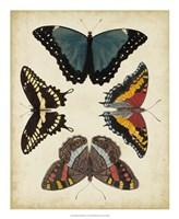 Display of Butterflies I Framed Print