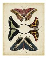 Display of Butterflies II Framed Print