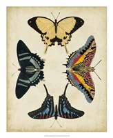 Display of Butterflies III Framed Print