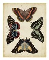 Display of Butterflies IV Framed Print