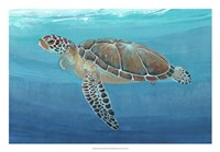 "Ocean Sea Turtle II by Timothy O'Toole - 26"" x 18"""