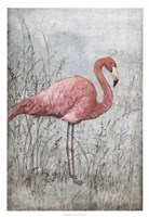 "American Flamingo I by Timothy O'Toole - 22"" x 32"""