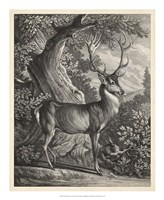 Woodland Deer I Fine Art Print