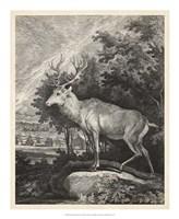 "Woodland Deer II by J. e. Ridinger - 18"" x 22"""