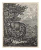 "Woodland Deer IV by J. e. Ridinger - 18"" x 22"""