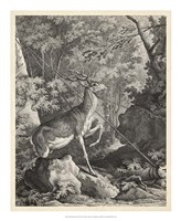Woodland Deer VII Fine Art Print