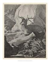 Woodland Deer VIII Fine Art Print