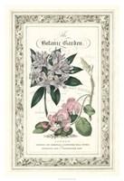 The Botanic Garden II Framed Print