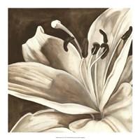 "Sepia Lily I by Jennifer Goldberger - 18"" x 18"""