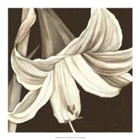 "Sepia Lily III by Jennifer Goldberger - 18"" x 18"""