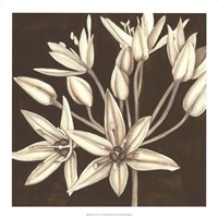 "Sepia Lily IV by Jennifer Goldberger - 18"" x 18"""