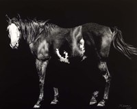 Bald-Faced Broodmare Fine Art Print