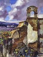 Mission Vineyard Fine Art Print