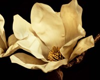 "20"" x 16"" Magnolia Photography"