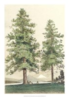 "Majestic Pine II - 16"" x 22"""