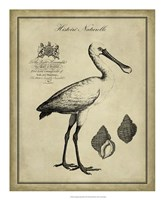 """Antiquarian Spoonbill by Vision Studio - 18"""" x 22"""" - $27.99"""