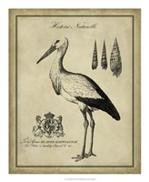 "Antiquarian Stork by Vision Studio - 18"" x 22"""