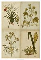 Botanical Montage II Framed Print