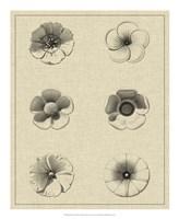 "Floral Rosette I by Vision Studio - 18"" x 22"", FulcrumGallery.com brand"