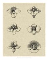 "Floral Rosette IV by Vision Studio - 18"" x 22"", FulcrumGallery.com brand"