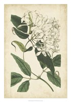 "Botanical Display II by Vision Studio - 18"" x 26"""