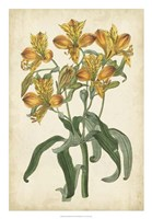 "Botanical Display III by Vision Studio - 18"" x 26"""