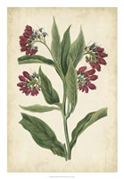 "Botanical Display IV by Vision Studio - 18"" x 26"""