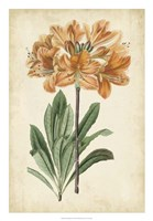 "Botanical Display V by Vision Studio - 18"" x 26"""