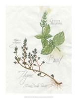 Basil & Thyme Fine Art Print
