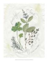 Parsley & Sage Fine Art Print