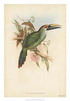 """Tropical Toucans I by John Gould - 18"""" x 26"""""""
