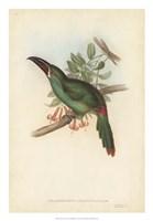 "Tropical Toucans II by John Gould - 18"" x 26"""
