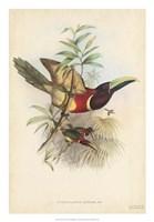 "Tropical Toucans III by John Gould - 18"" x 26"""