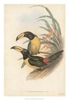 Tropical Toucans IV Fine Art Print