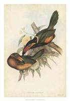 Tropical Toucans V Fine Art Print