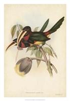 "Tropical Toucans VIII by John Gould - 18"" x 26"""
