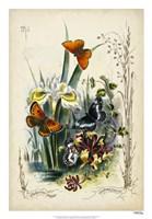 Victorian Butterfly Garden II Fine Art Print