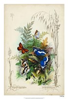 "Victorian Butterfly Garden III by Vision Studio - 18"" x 26"""
