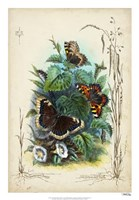 """Victorian Butterfly Garden IV by Vision Studio - 18"""" x 26"""""""