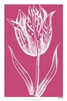 "Chromatic Tulips V by Vision Studio - 16"" x 24"""