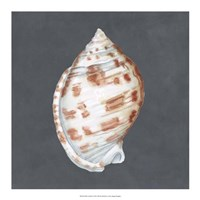 "Shell on Slate I by Megan Meagher - 18"" x 18"""
