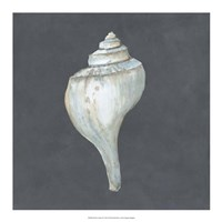 "Shell on Slate IV by Megan Meagher - 18"" x 18"""