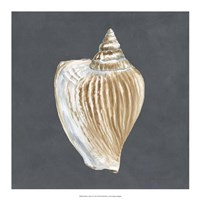 "Shell on Slate VI by Megan Meagher - 18"" x 18"""